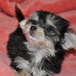 小型犬ハーフ