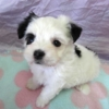 ミックス犬(ハーフ)小型犬情報