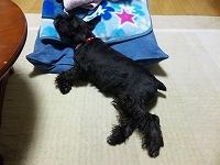 hokkaido_mokochan
