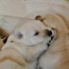Thumbnail of post image 082