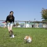 sdogrun