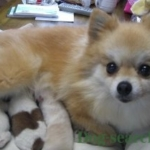 pome_dogsearch (10)
