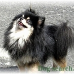 pome_dogsearch (11)