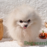 pome_dogsearch (13)