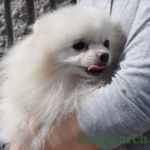 pome_dogsearch (4)