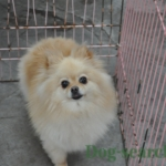 pome_dogsearch (5)