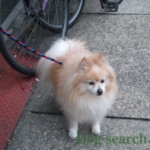 pome_dogsearch (7)